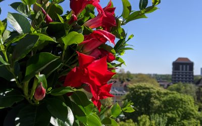 Balkon- und Terrassenbepflanzung