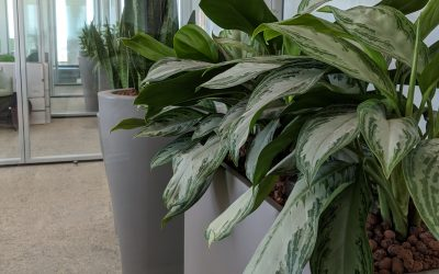Pflanzenmiete und Pflanzenleasing