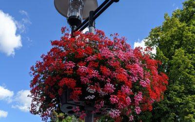 Blühende Fassaden