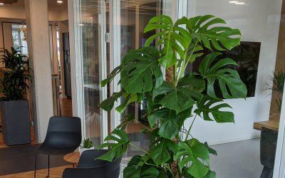 Büropflanzen und Zimmerpflanzen