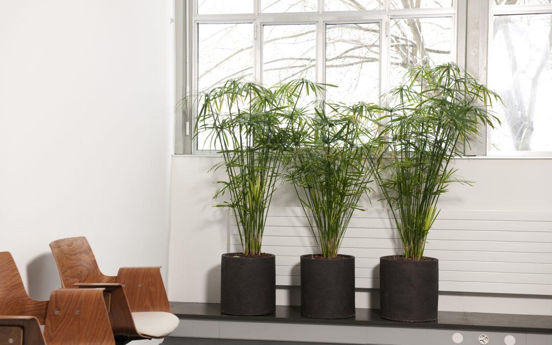 Luftbefeuchtung mit Pflanzen
