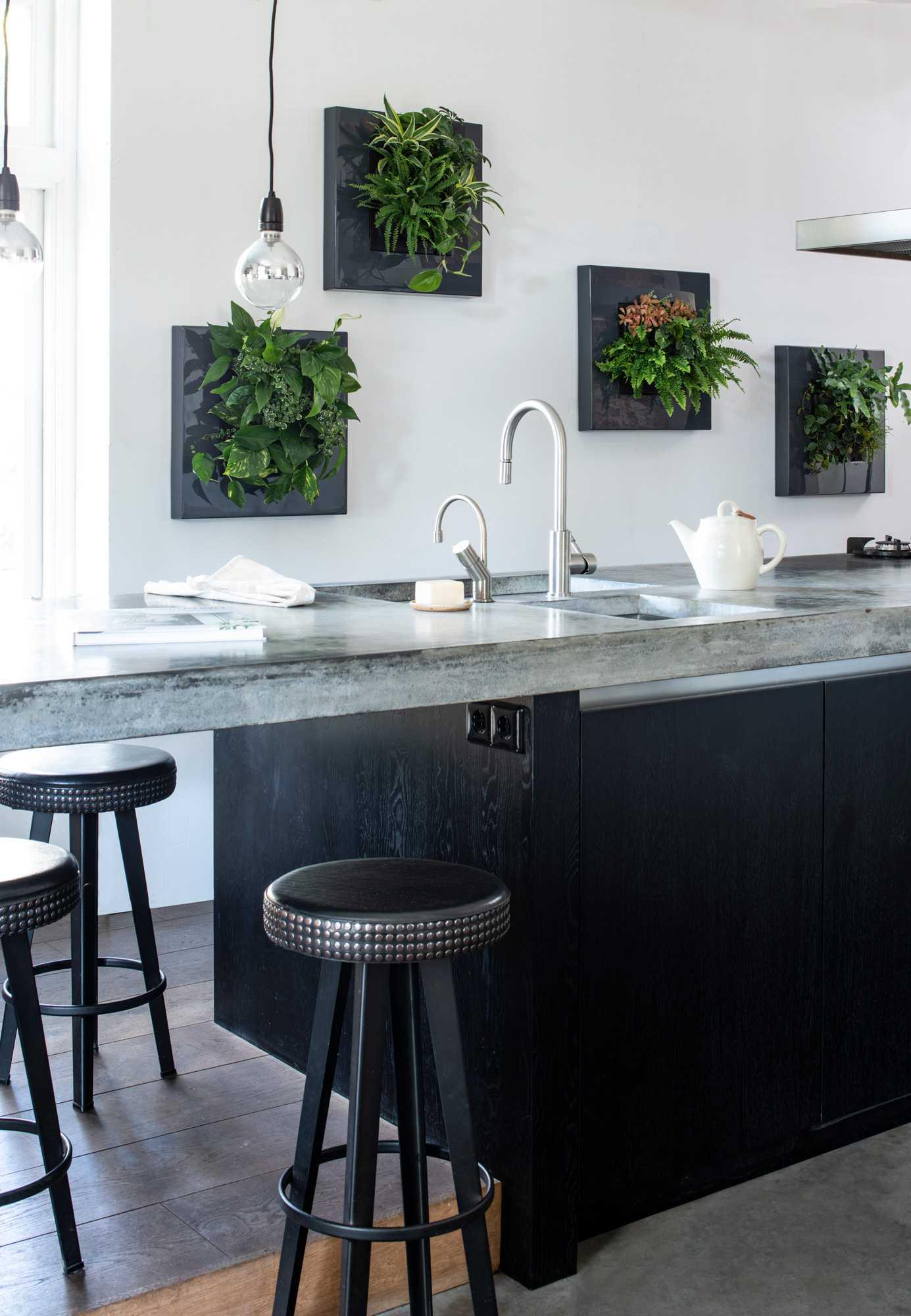 Pflanzenbilder in der Küche