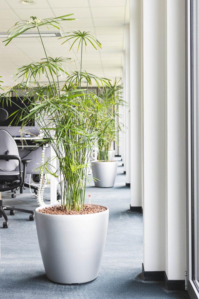 Pflanze im Büro