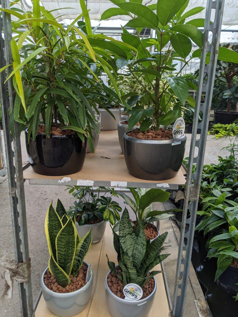 Büropflanzen in Hydrokultur auf einem Container
